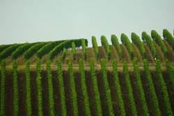 Linien grün