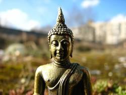 Buddha im Moos