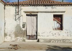 House & Cat