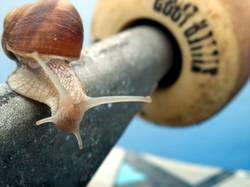 snail on board