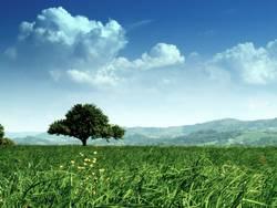 Baum im Grün