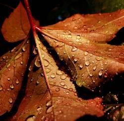 autumnrain I