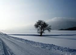 ...allein im Schnee