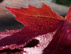 Auch Blätter bluten...