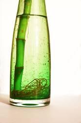 Bambus in de bottle