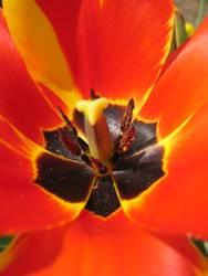 Macro Blume