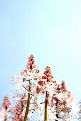später im Frühling