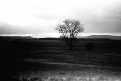 Analogue Tree