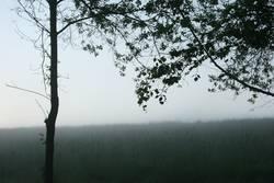 Nebel in Oberberg