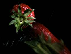 abtropfende Erdbeere