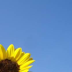 Sommer gelb_blau