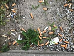 Cigarette ends contaminate the groundwater