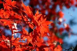 Herbstflammen