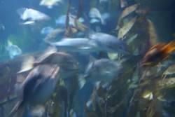 Fische blau
