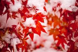 Herbst mit Schnee