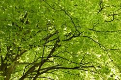 Das schönste Grün der Welt II