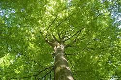 Das schönste Grün der Welt