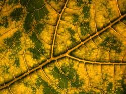 Labyrinth der Zucchini 2