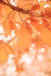 Blätter an einem sonnigen Morgen, Herbstsaison