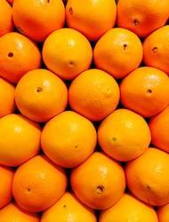 Orangen, Früchte