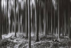 spooky trees II