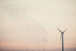 großer bogen um erneuerbare energien