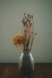 mohn in der vase
