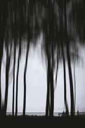 spooky trees III