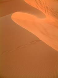 Wüstenwelle
