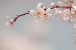 Zauber des Frühling