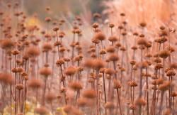 Garten Impressionen im Herbst