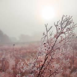 Natur - Winter Morgen
