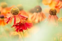 Sommerblumen - Blumen und Natur