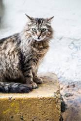 Katzenportrait.