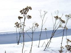 Rebellion gegen den Winter