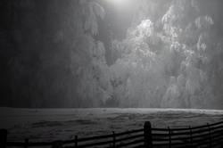 strahlender Nachtwald