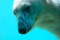 Eisbär - eiskalt 2