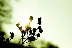 Wintersonne küsst Pflanze