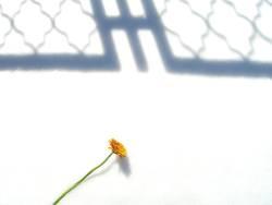 Blume im Schnee 1