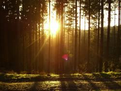 Wald im Gegenlicht I