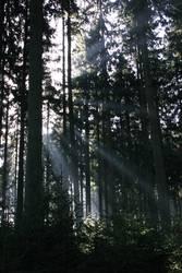 'N Wald