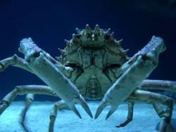 Krabbenshooting