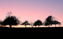 Landschaftskonterfile [Bäume]