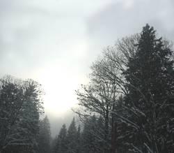 Tannheimer Winternebel