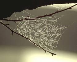 Spinnennetz komplett