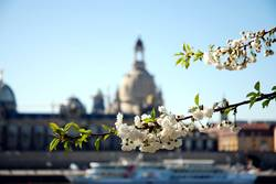 Elbflorenz im Frühling