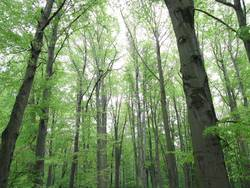 Riesenwald