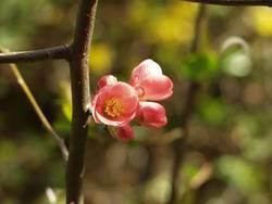 Blüte, Rosa