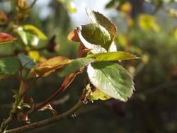 Blätter am Zweig
