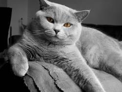 Katze III